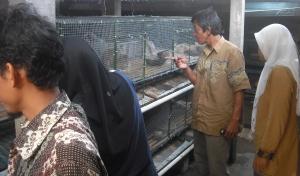 Mencermati dan mengamati, bagaimana  kita akan membuat kandang yang praktis serta nyaman buat ternak